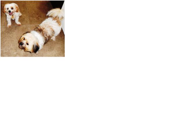 dogrewards